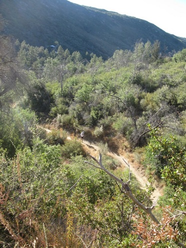 Noble Canyon trail near Big Tree Aid Station