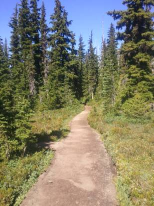 Upper section of the trail, felt like single-track trail yet wider.