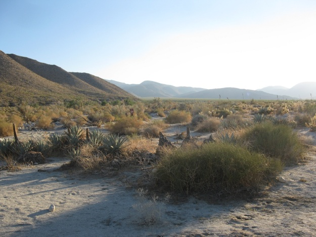 Pinyon Wash, the start line for the Lost Boys 50.